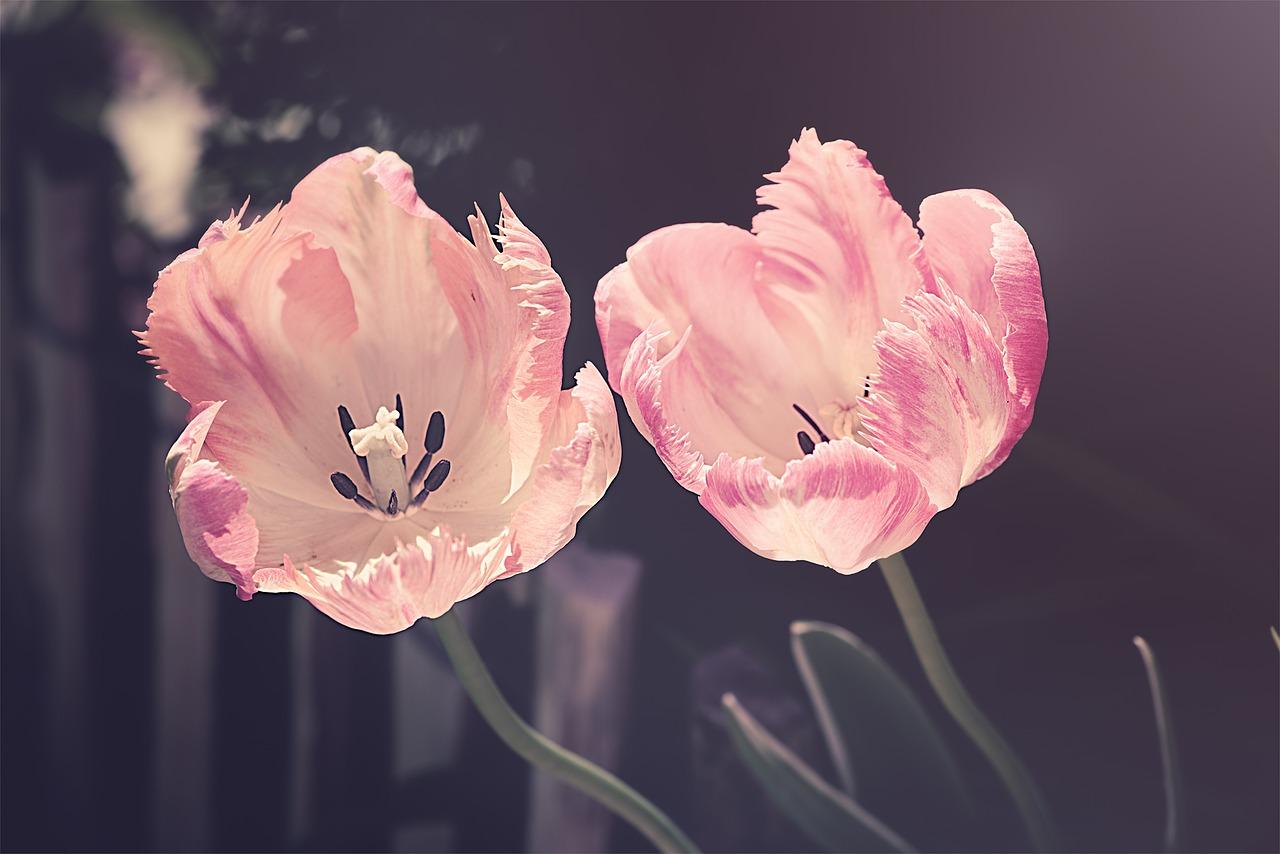 Est-ce que le métier de fleuriste est intéressant ?